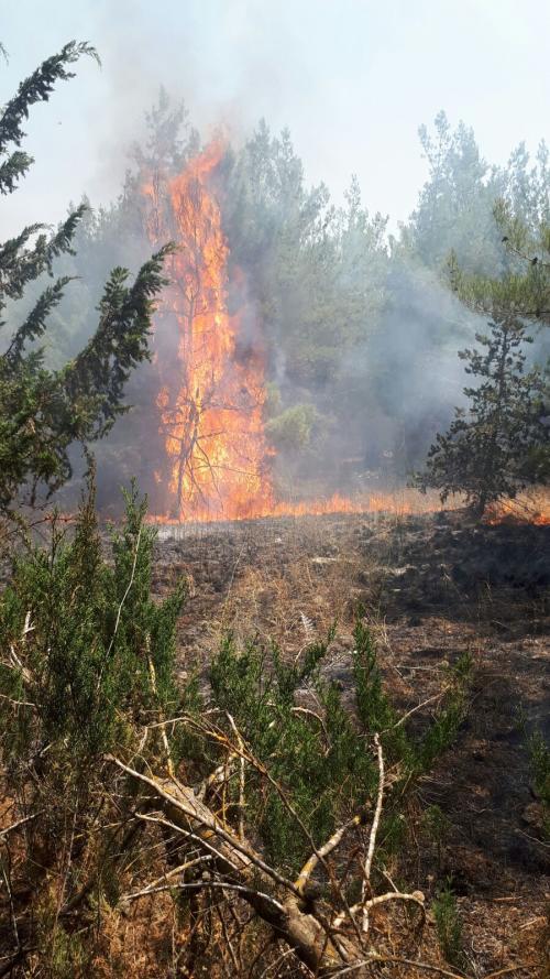 שריפה בהרחבה