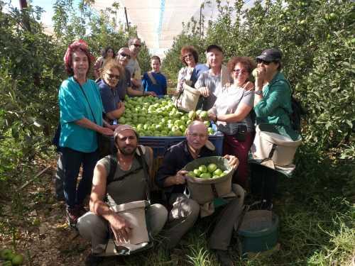 גיוס חברים לקטיף תפוחים